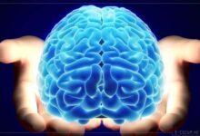 Beynin iki yarısı