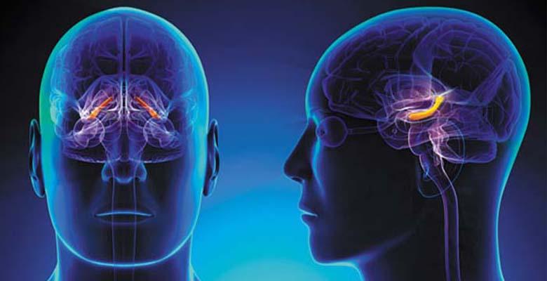 Beyin hücrelerinin yenilenmesi