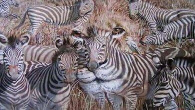 Hangi hayvanı görüyorsun?